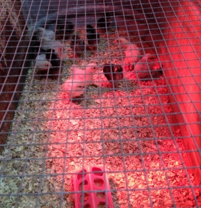 under the heat lamp January 16, 2012